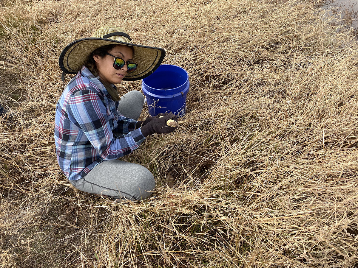 Ariana Tamayo went to Whitewater Draw on Nov. 2 to plant milkweed for monarch butterflies. The wildlife area has a maintained water source to accommodate migrating sandhill cranes, making it ideal for milkweed.