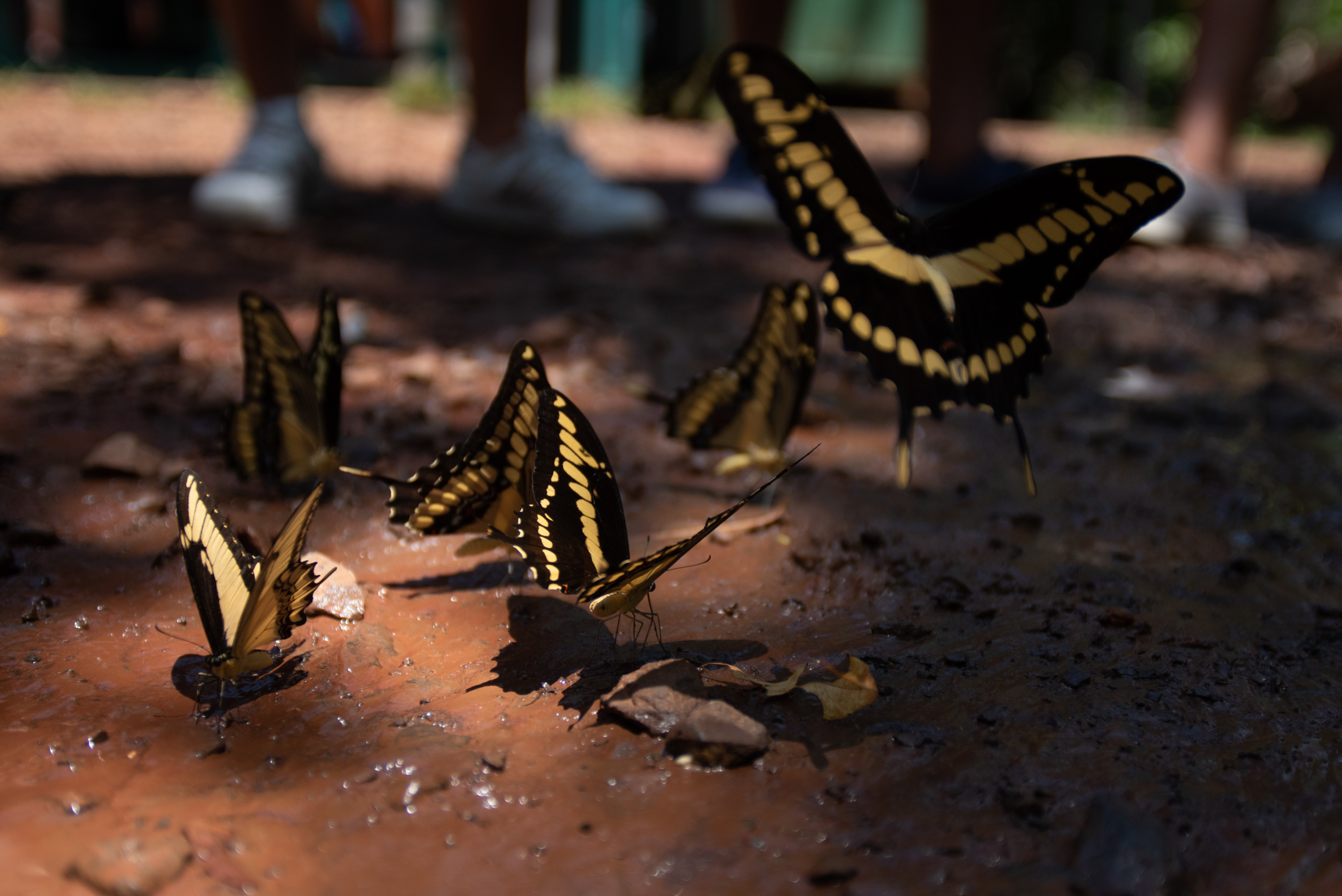Butterflies fly in the shadows of a tree in Iguazú National Park.