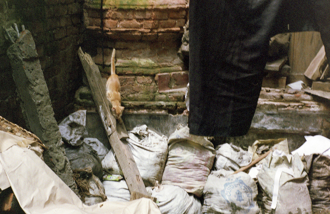 A cat crawls through the rubbish in Old Dhaka.