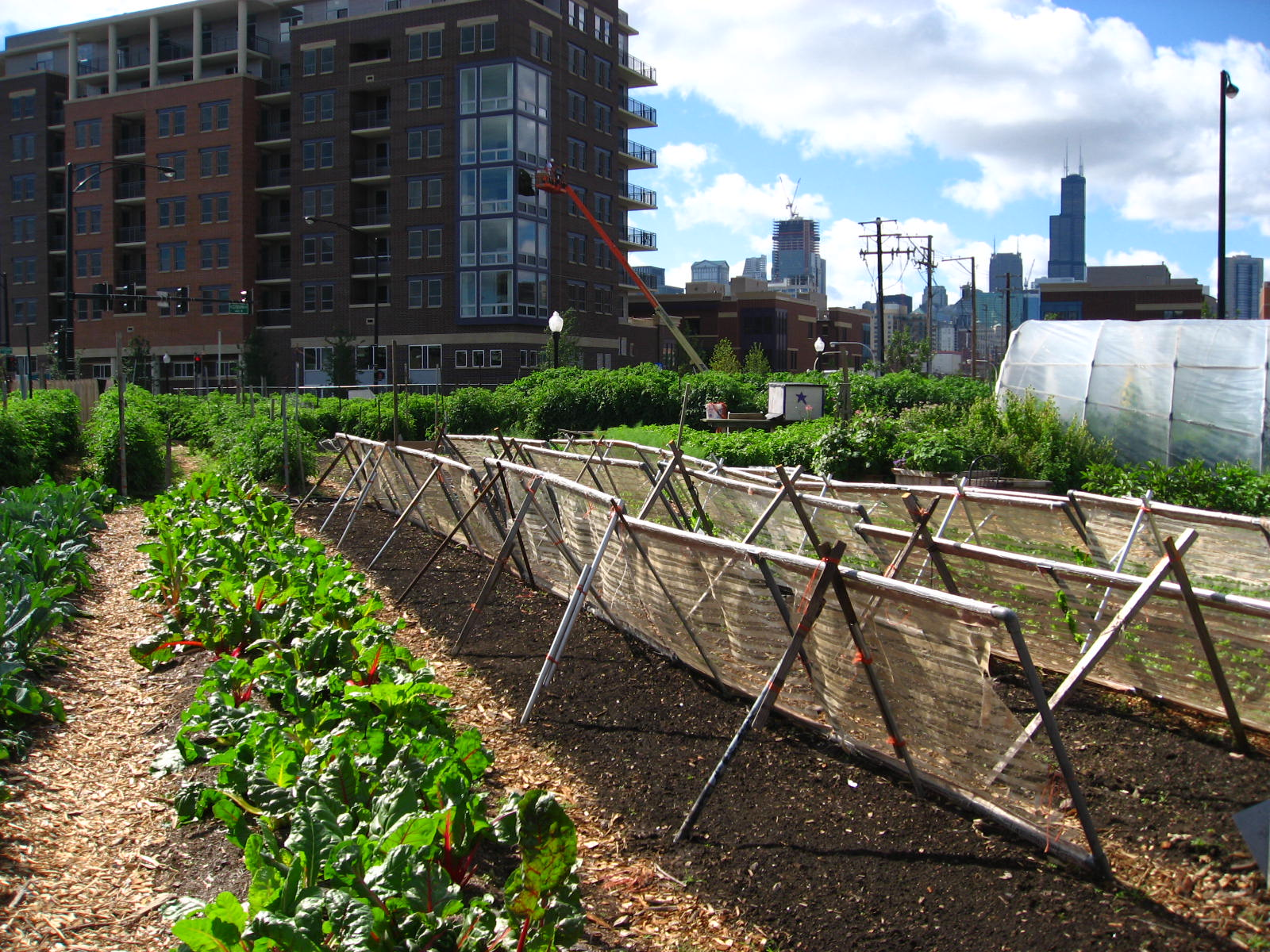 farming in the city here to stay planet forward