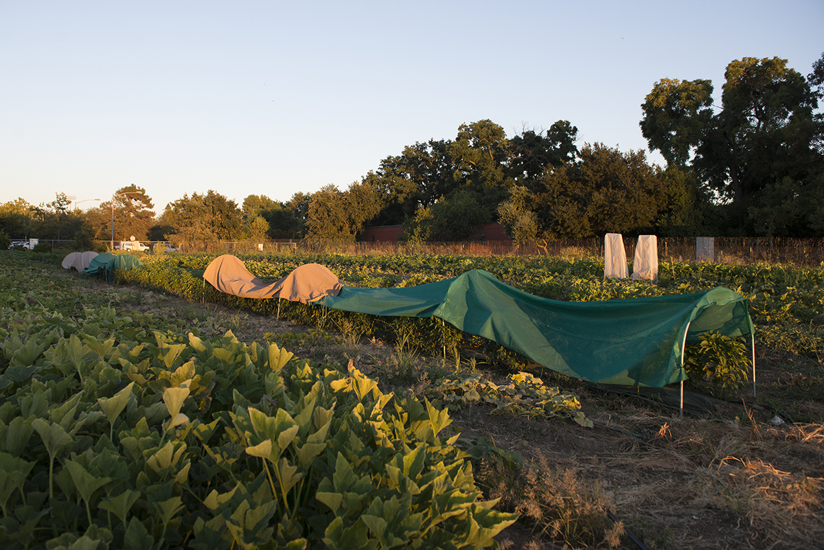 Small farms have developed a niche market with people who distrust larger scale agriculture and people who want to have a closer relationship with their food. Many small farms sell produce locally through famers markets and community supported agriculture programs.