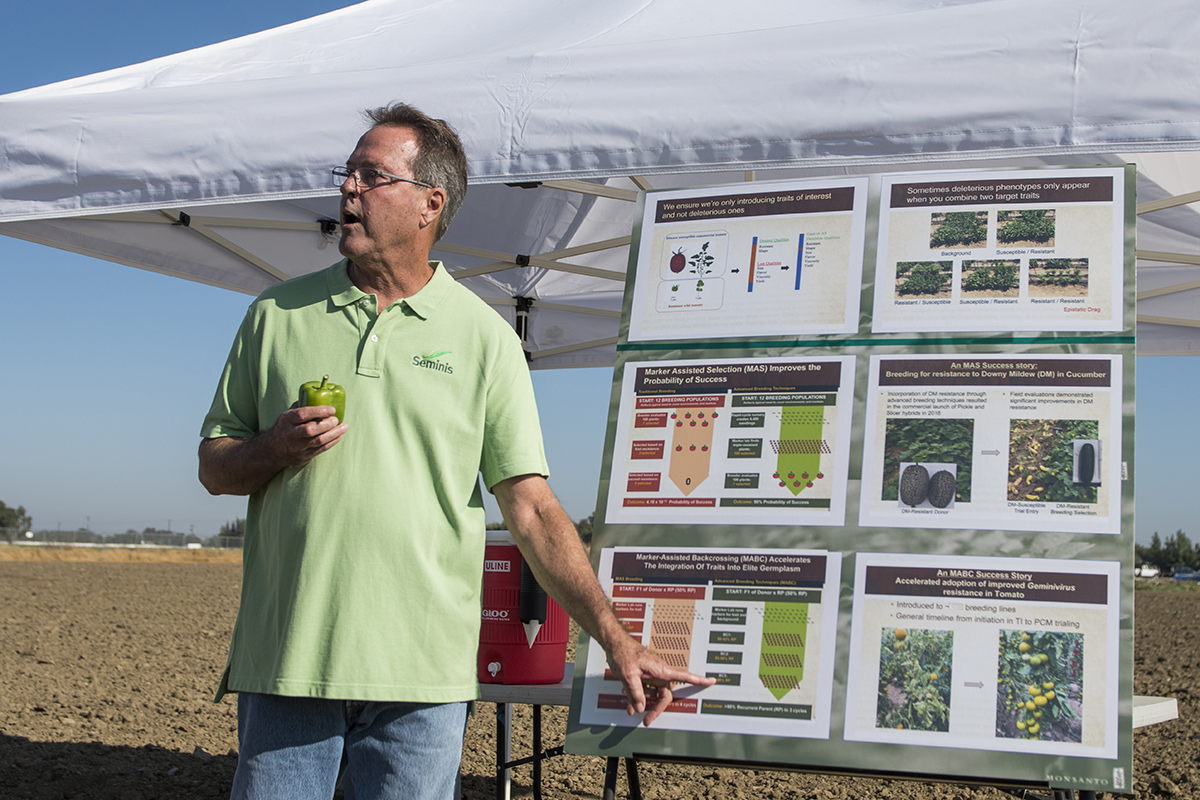Bayer research associate Pat Hogan describes the conventional breeding technique of back crossing and how it is used in the hybridization of bell peppers.