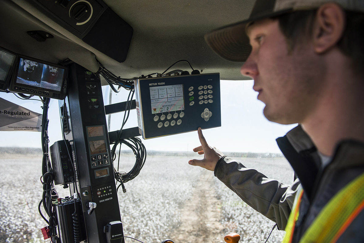 Bayer contractor Chase Gibson drives the picker over the test plots. The picker collects data on the weight of the lent from each plot. That data then gets stored to a USB drive so it can be compared to the earlier data to determine which tests move forward.