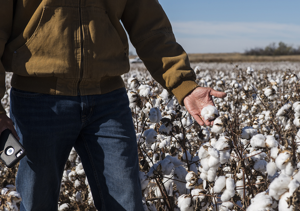 Plant breeders also are focusing on giving producers the tools they need to be viable. Bayer uses test fields across the South Plains to develop cotton varieties that will deliver the maximum yield with minimum input and standing up to the relatively volatile climate.