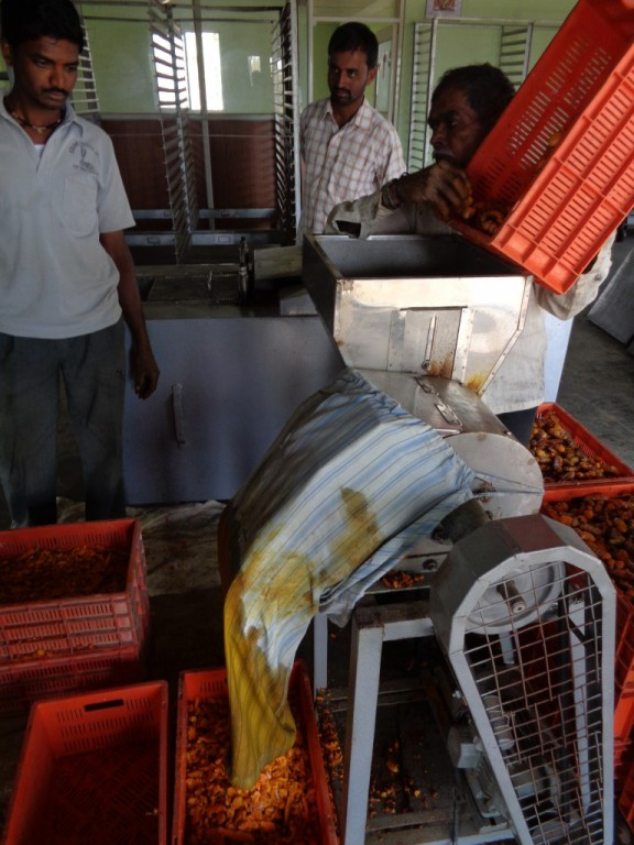Turmeric slicer at processing facility in Sangli, India. (Tavish Fenbert)