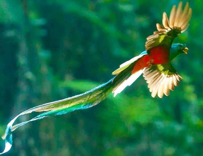 http://www.planetforward.org/sites/default/files/quetzal%20flying%20mejor.jpg