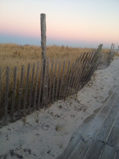 The vegetated dunes of a Barnegat Light beach.