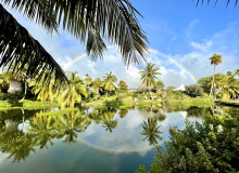 A rainbow in the sky is reflected on the surface of a pond surrounded by green palm trees and foliage.
