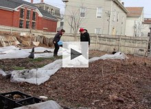 Urban Farming: Where sidewalk meets soil