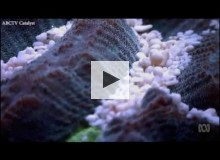 Coral is dying as a result of coral bleaching.