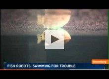 Robotic Fish Search Water for Pollutants