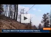 Building Innovation from Devastated Forests