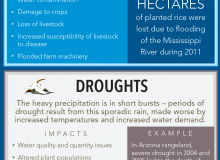 Climate change projections suggest an increased variability of temperature and precipitation and extreme weather that can hit agriculture hard.