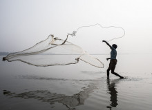 A fisherman throws a net in the River Tista in Bangladesh