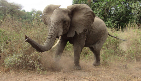 Bees maintain harmony between elephants and farmers.