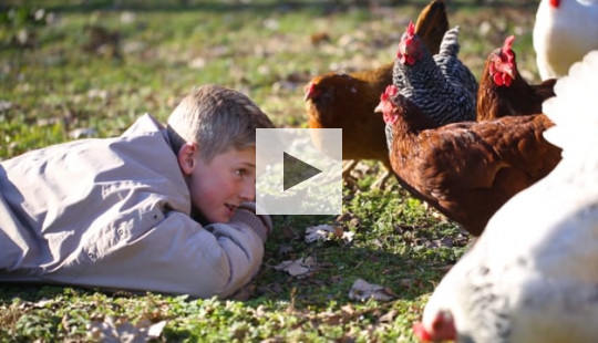 A 13 year-old chicken farmer finds success.