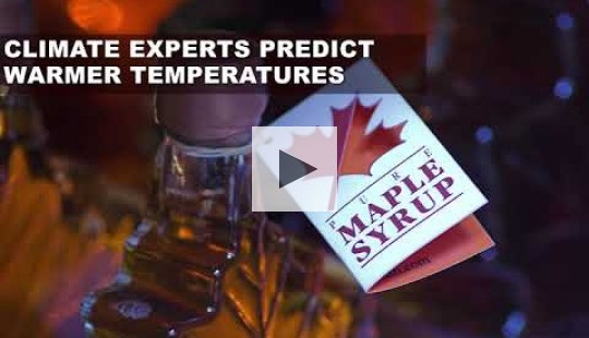 Climate change harms maple syrup
