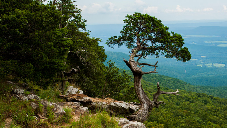 A tree on the edge of a forested bluff which looks over a green valley below.