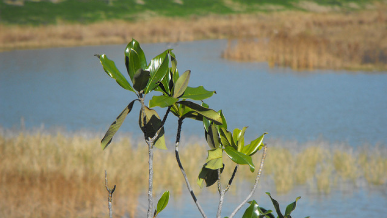 plant grows by a marsh