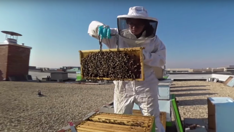 You'll want to grab a smartphone and the YouTube app to check out the 360-degree video that explores a partnership between GW and a nearby restaurant to, respectively, host honeybees and reap the rewards of their work with uber local honey. (Screen grab of 360 video)