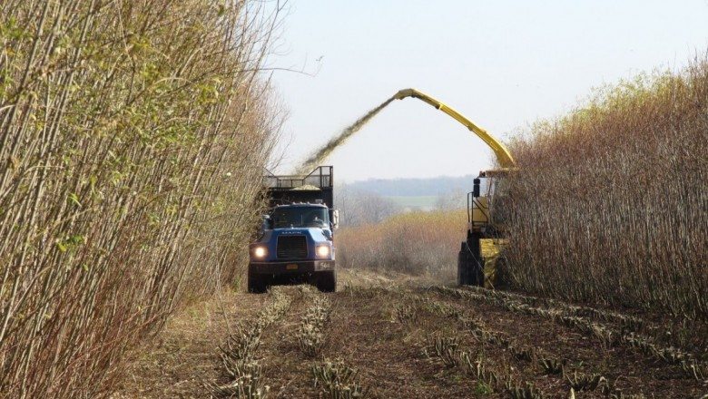 Shrub willow is being harvested for biomass. (Photos courtesy The Willow Project at SUNY-ESF)