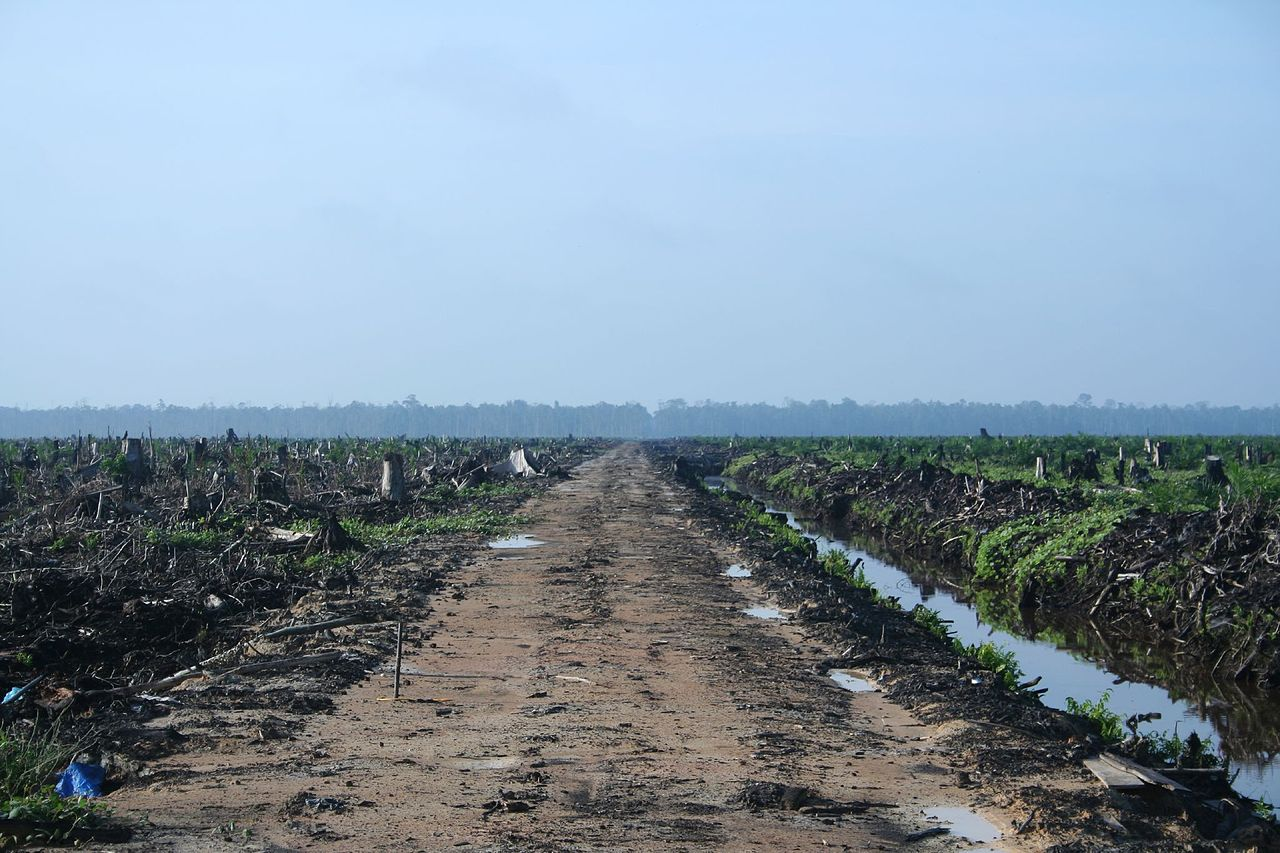 clearcut oil palm in Riau