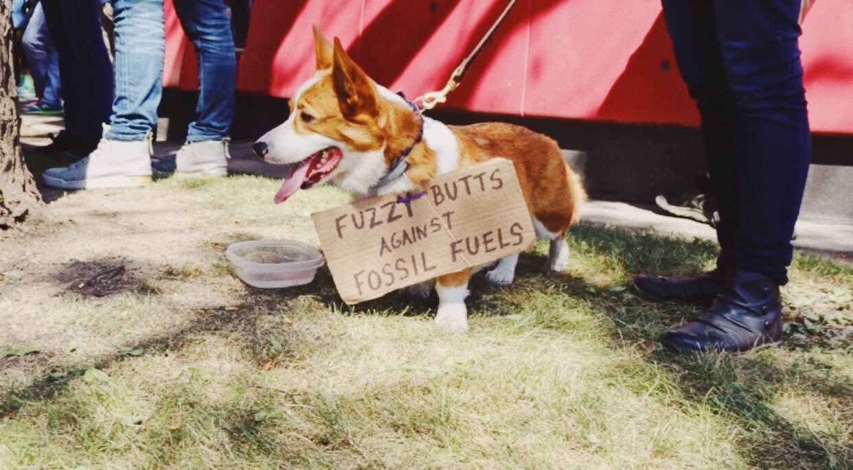 "Dog wearing a protest sign ""fuzzy butts against fossil fuels"""