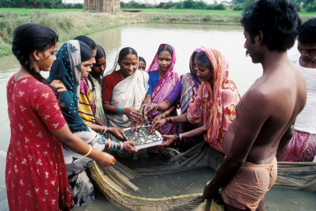 Women stand in a village pond in India to check on common carp fry they are raising