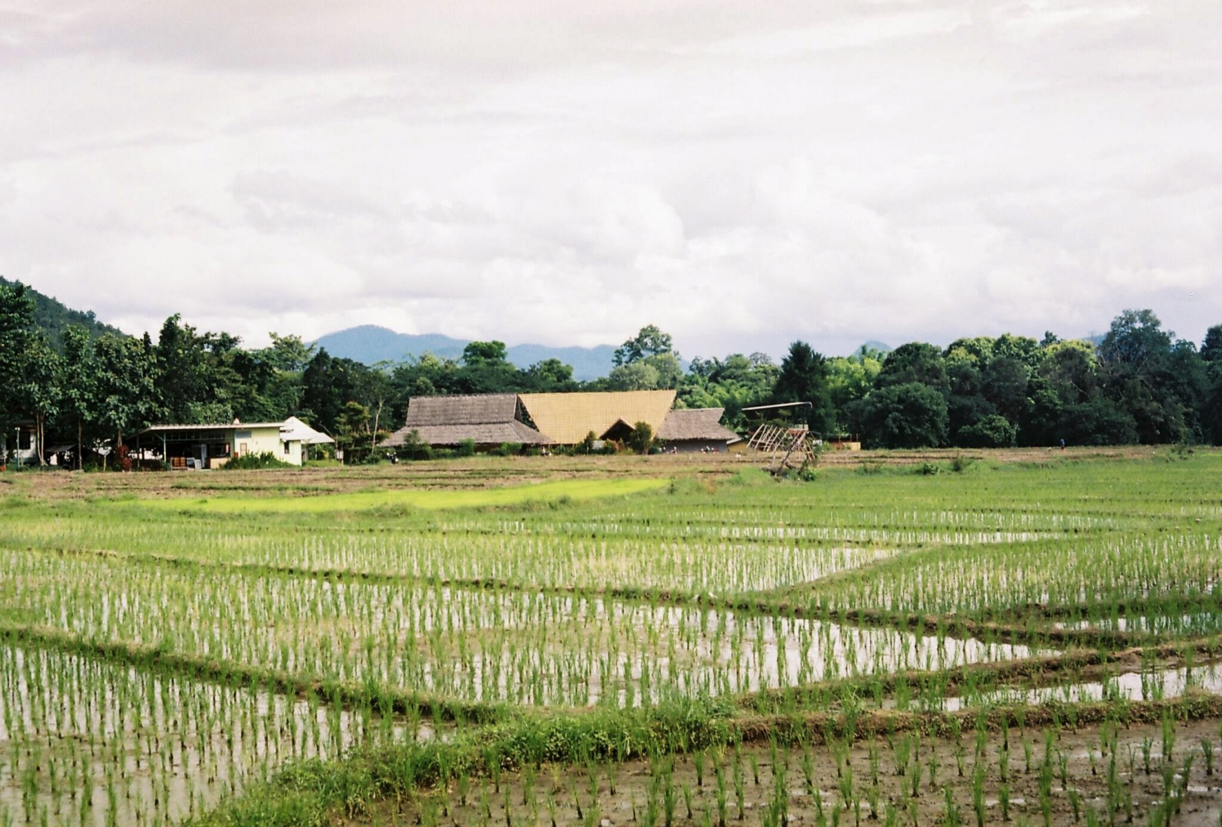 Agriculture projects could scale to places like Pai, Thailand