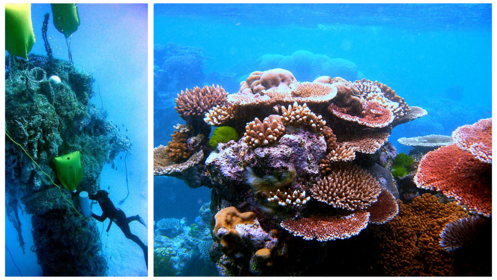 2 images of coral reefs