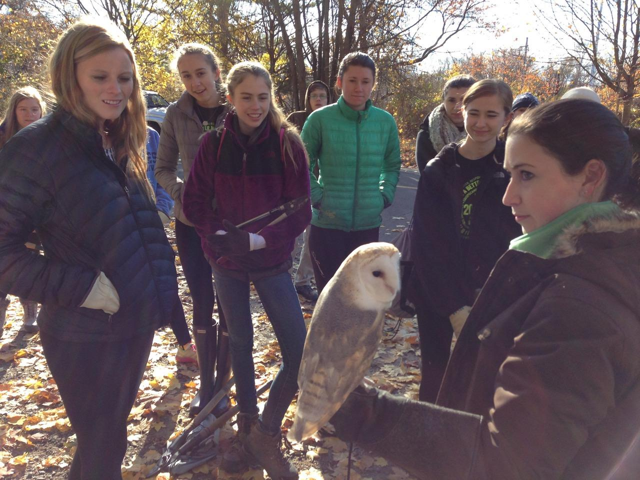 A Barn Owl visits volunteers at the Smith Richardson preserve in Westport, CT. Hundreds of volunteers helped transform the overgrown land into a thriving ecosystem (Photo courtesy of Jerid O'Connell).
